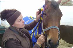 HeadShy horses - treatment from The Equine Therapist